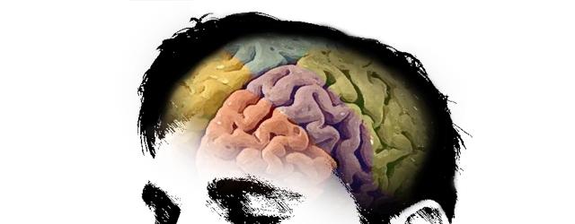 David-Kinnear: the bilingual brain