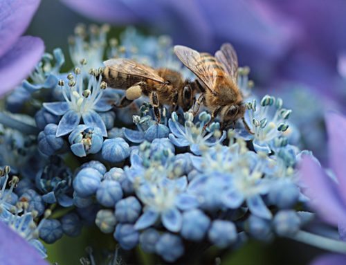 Can Tech Save the Honeybees?