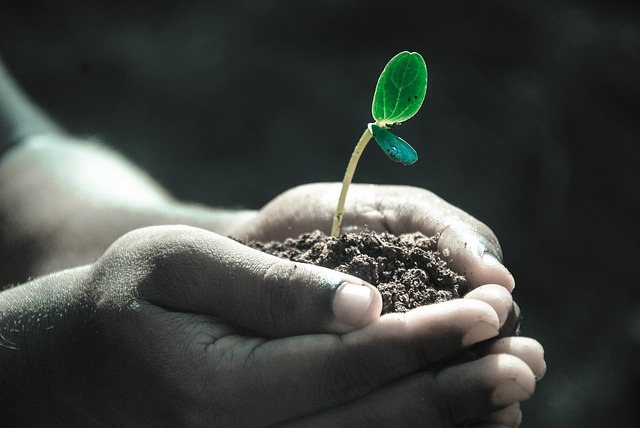 Human hands hold a newly grown plant in a pile of dirt.